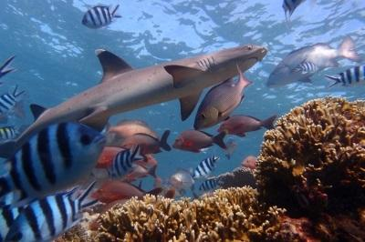 Sharks and fishes under water