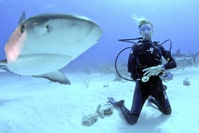 Sharks Attacked: The Conservation Crisis