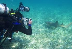 A Conservation volunteer monitors marine life during a survey dive in Belize in the Caribbean.