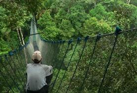 A volunteer sits on a tree canopy walkway during a wildlife survey at our Conservation placement in the Amazon, Peru.