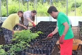 High School Project volunteers take care of seedlings at a tree nursery at the Care & Conservation placement in Ecuador.