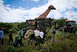 Volunteer in Kenya for High School: Conservation