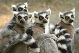 Volunteer in Madagascar for High School: Conservation