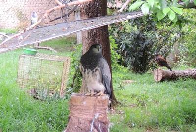 Animal Care in Bolivia