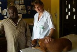 A Veterinary Medicine volunteer comforts a dog before an operation at a local veterinary clinic in Ghana.