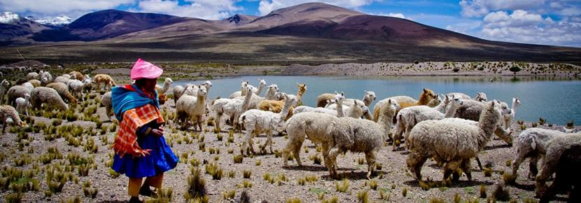 Scenic photo of local Peruvian Shepherd with llamas overlooking mountains of Peru