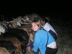 Volunteer milking goats in Mongolia